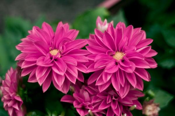 flor de uvero cuento para niños